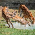 Cuatro Nuevos Inquilinos En El Parque Zoológico Nacional