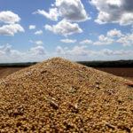 """Argentina Logra Un """"Acuerdo Histórico"""" Para Exportar Soja A China, Tras 20 Años De Negociaciones"""