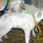 España: Destinan 2,7 Millones Para Preservar Las Especies Vegetales Y Ganaderas Autóctonas
