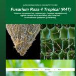 Guía para el diagnóstico de Fusarium Raza 4 Tropical (R4T)