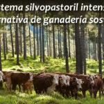 El sistema silvopastoril intensivo como alternativa para una ganadería sostenible