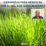 GRAMINEAS PARA HENIFICAR
