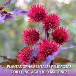 Especies de plantas ornamentales peligrosas