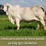CRITERIOS PARA LA SELECCION DE TOROS EN AUSTRALIA